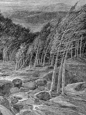 "John Muir: ""A Wind-storm in the Forests"""