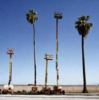Cherry pickers and palms, Manteca, California