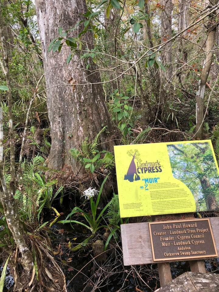 Corkscrew Swamp Florida Landmark Cypress 2 Muir Florida