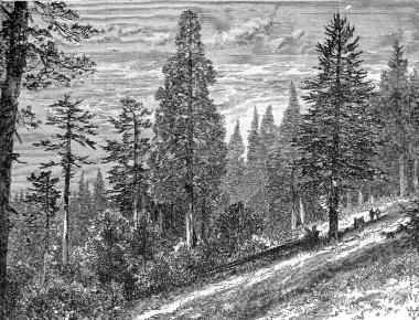 The Mountains Of California By John Muir 1894 John