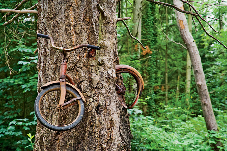 Chained a bicycle to a tree on washington s vashon island the tree